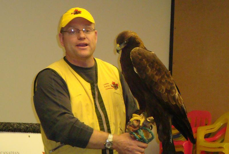 baby golden eagle pictures. and a Golden eagle.